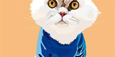 華麗王妃來襲——為何鍾愛波斯貓