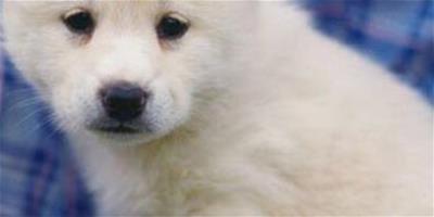 狗狗也會缺鈣你知道嗎 狗狗缺鈣吃什麼好