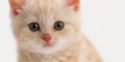 貓咪剃毛後的善後的小方法