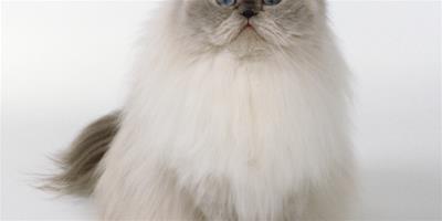 如何訓練你的貓咪與眾不同