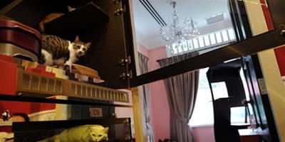新加坡5星級貓咪寵物旅店