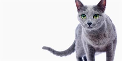 貓咪毛髮護理的常識