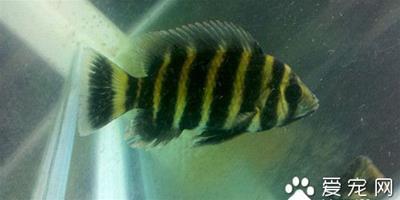 魚病診斷與防治 魚病害的自然環境因素有關