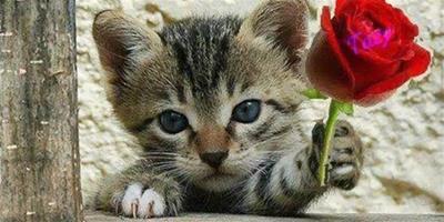 """貓咪如何表達""""我愛你""""?你得懂❗️"""