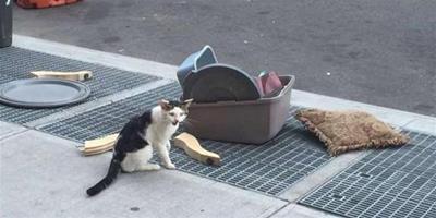 貓咪和它的行李被主人扔出了屋,貓咪呆坐原地兩小時不知所措