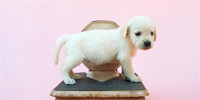 狗狗室內訓練上廁所的方法