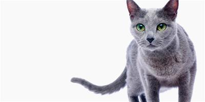 常見的貓咪洗髮液有哪些