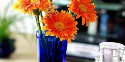 非洲菊插花的養護方法
